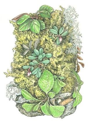 Spring_forest_Kristin Link_web-size