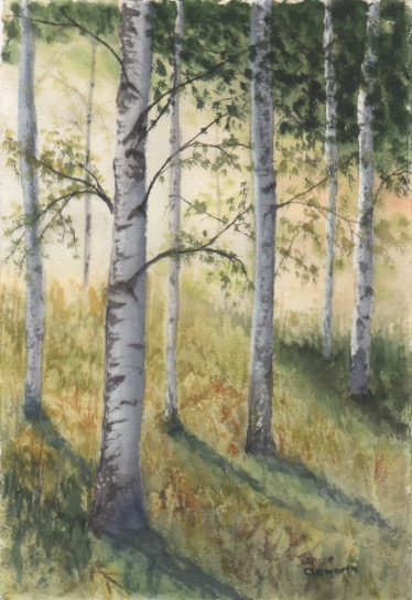 Birch Forest in the Morning Aug.2018